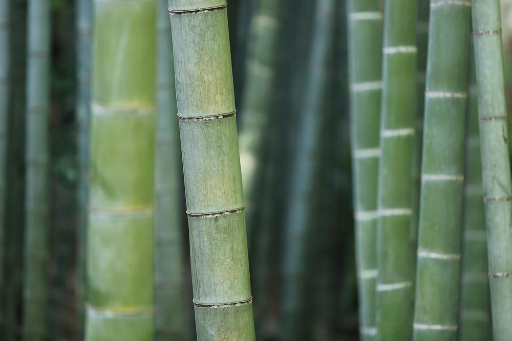 Bambou Wedressfair