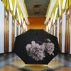 Pivoine noire - Klaoos - 2