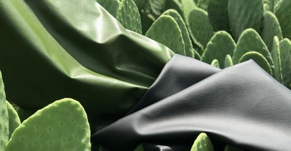 photo de Cuir de cactus