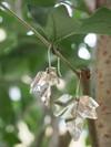 Boucles d'oreilles feuilles de lierre - argent recyclé - Elle & Sens - 2
