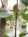 Boucles d'oreilles feuilles de lierre - argent recyclé - Elle & Sens - 5