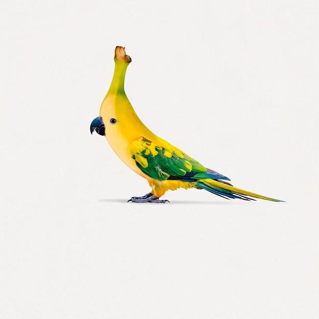 T-shirt white banana bird - Bask in the Sun num 2