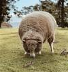 laine biologique ethique durable mode