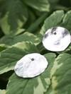 Boucles d'oreilles pilea en argent recyclé - Elle & Sens - 6
