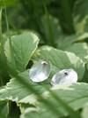 Boucles d'oreilles pilea (bébé) en argent recyclé - Elle & Sens - 3