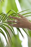 Bague feuilles hoya kerrii - argent recyclé - Elle & Sens - 5