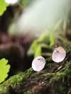 Boucles d'oreilles pilea (bébé) en argent recyclé - Elle & Sens - 2