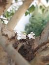 Puces feuilles de lierre en argent recyclé - Elle & Sens - 2